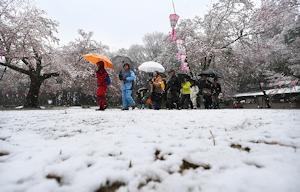 八王子の降雪