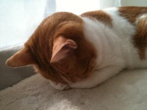 ごめん寝ネコさん
