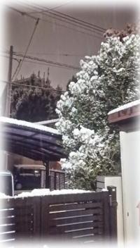 20150310雪