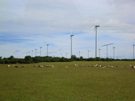 風力発電とゴットランドシープ