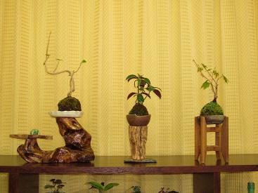 2015ミニ盆栽-2