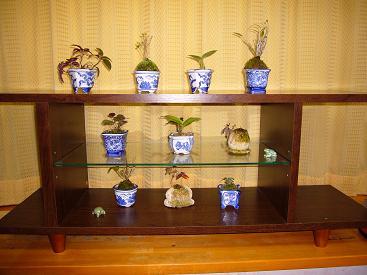 2015ミニ盆栽