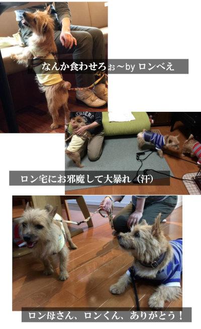 ロン③[1]