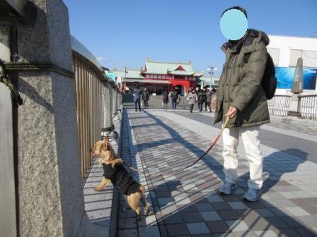 IMG_0659 14・12・30湘南