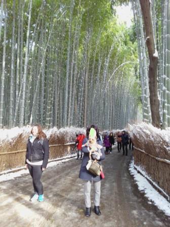 DSC_9439 15・1・2雪嵐山