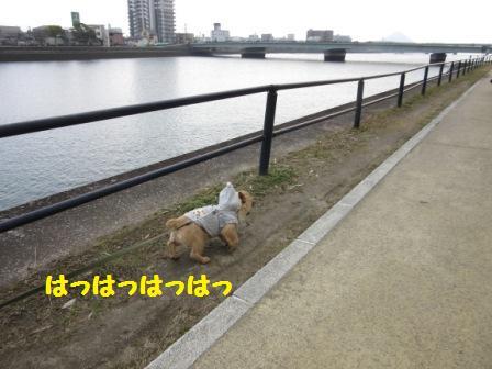 IMG_0805 15・1・17久方川辺