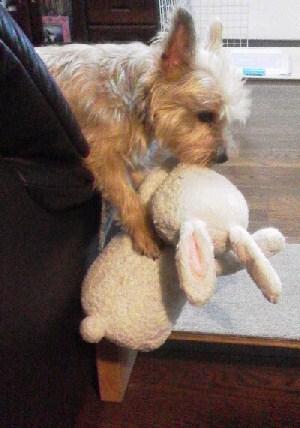2015020422040000ウサギさんとミィナ 小