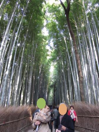 IMG_116715・2・21嵐山