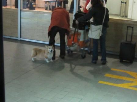 IMG_1551広島空港のコギさん