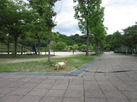 IMG_213815・5竜王公園