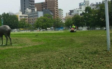 DSC_3491-1-115・6草刈り