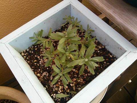 gardening244.jpg