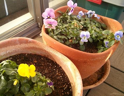 gardening249.jpg