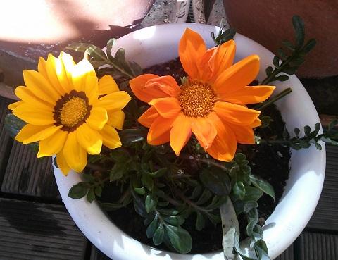 gardening276.jpg