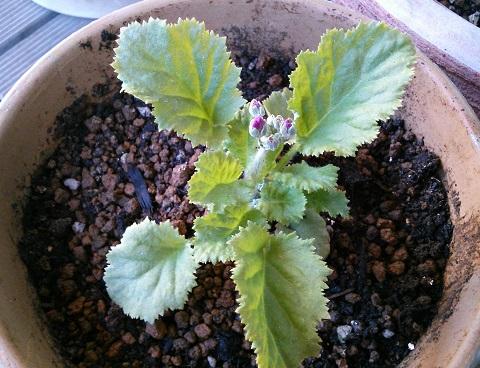 gardening278.jpg
