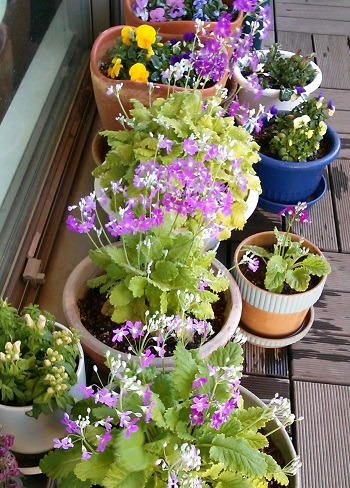 gardening284.jpg