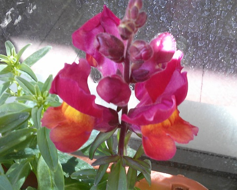gardening286.jpg