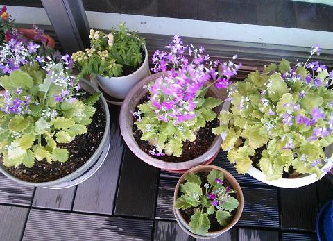 gardening288.jpg