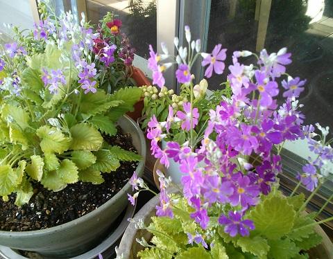 gardening290.jpg