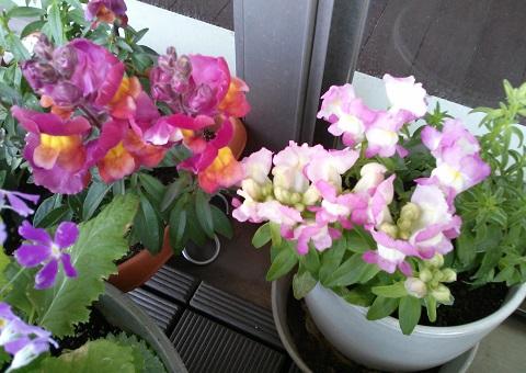 gardening294.jpg