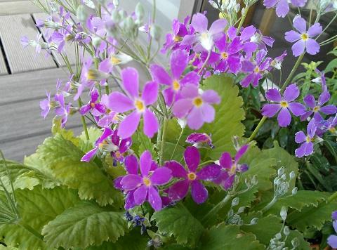 gardening297.jpg