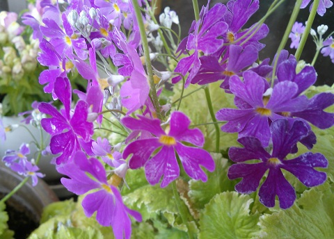 gardening299.jpg
