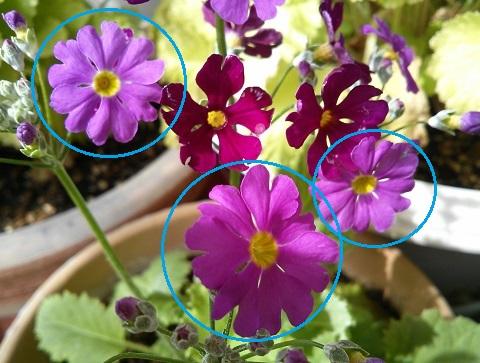gardening301.jpg
