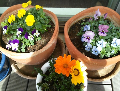gardening302.jpg