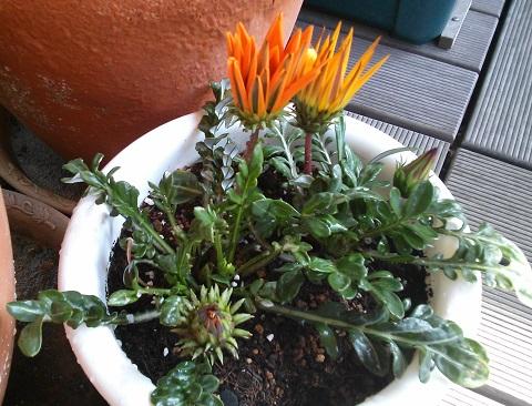 gardening304.jpg