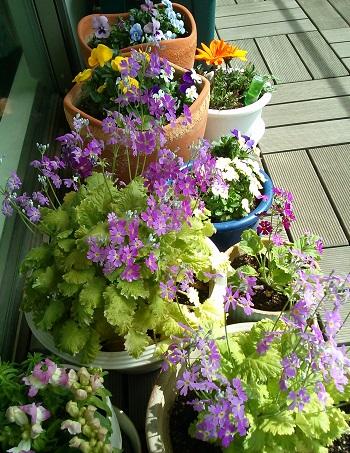 gardening306.jpg
