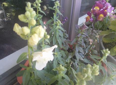 gardening317.jpg