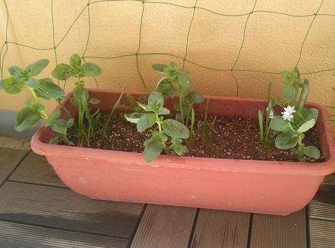gardening320.jpg