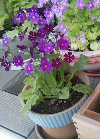 gardening323.jpg