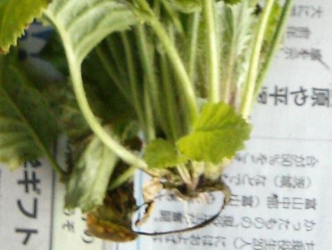 gardening325.jpg