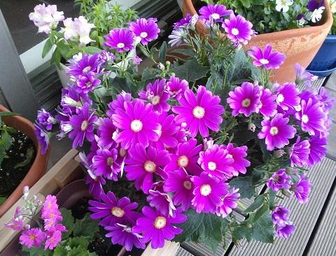 gardening328.jpg