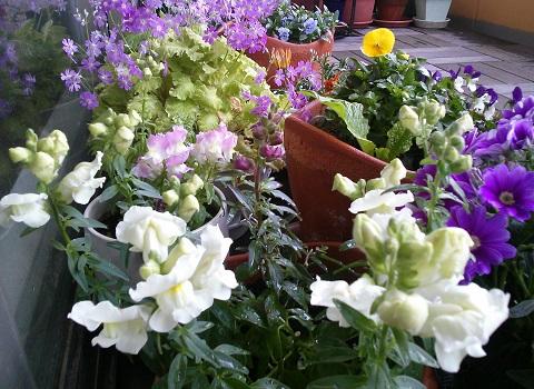 gardening329.jpg