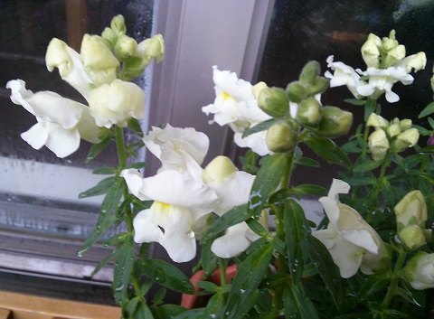 gardening330.jpg