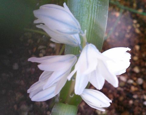 gardening333.jpg