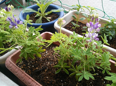 gardening337.jpg
