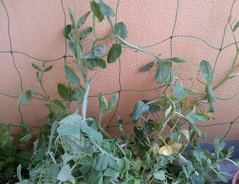 gardening342.jpg