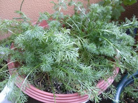 gardening344.jpg