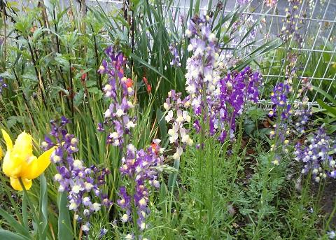 gardening345.jpg