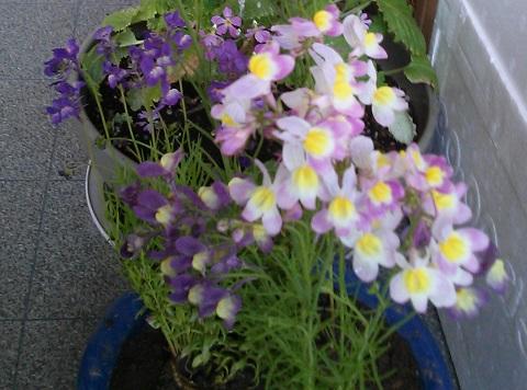 gardening349.jpg
