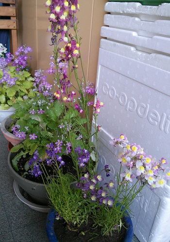 gardening350.jpg