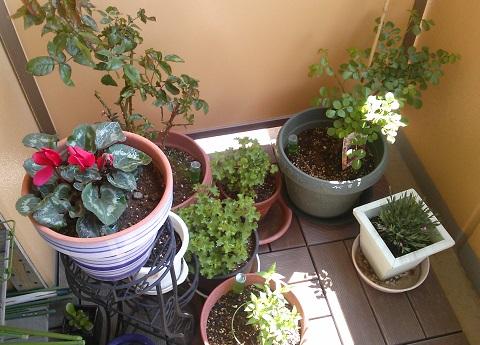 gardening354.jpg