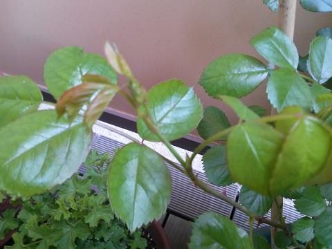 gardening358.jpg