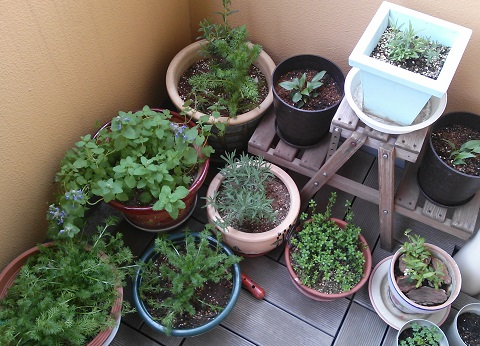 gardening364.jpg