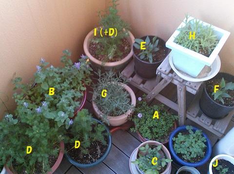 gardening365.jpg