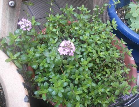 gardening366.jpg