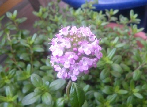 gardening367.jpg